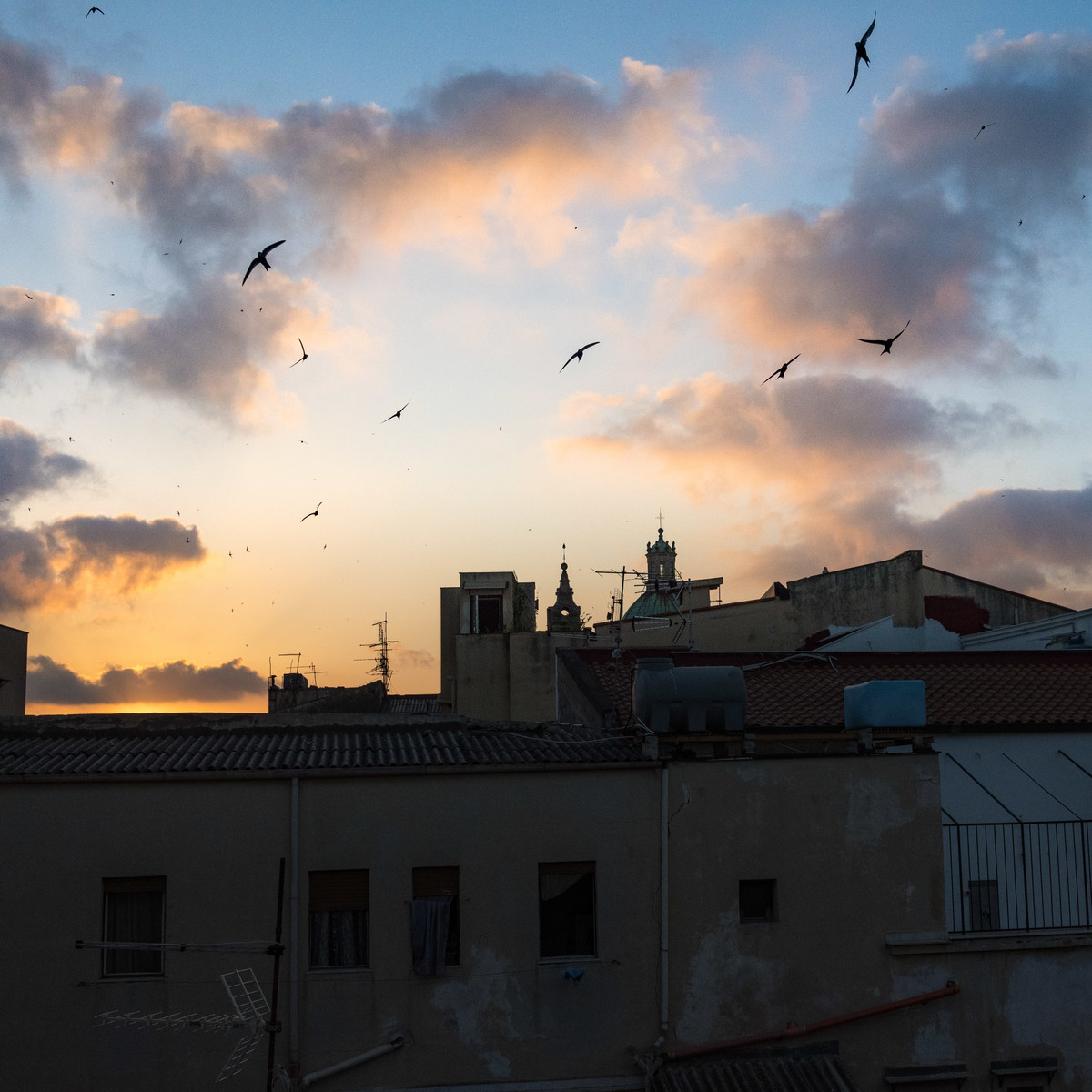 Swallows in flight, Palermo