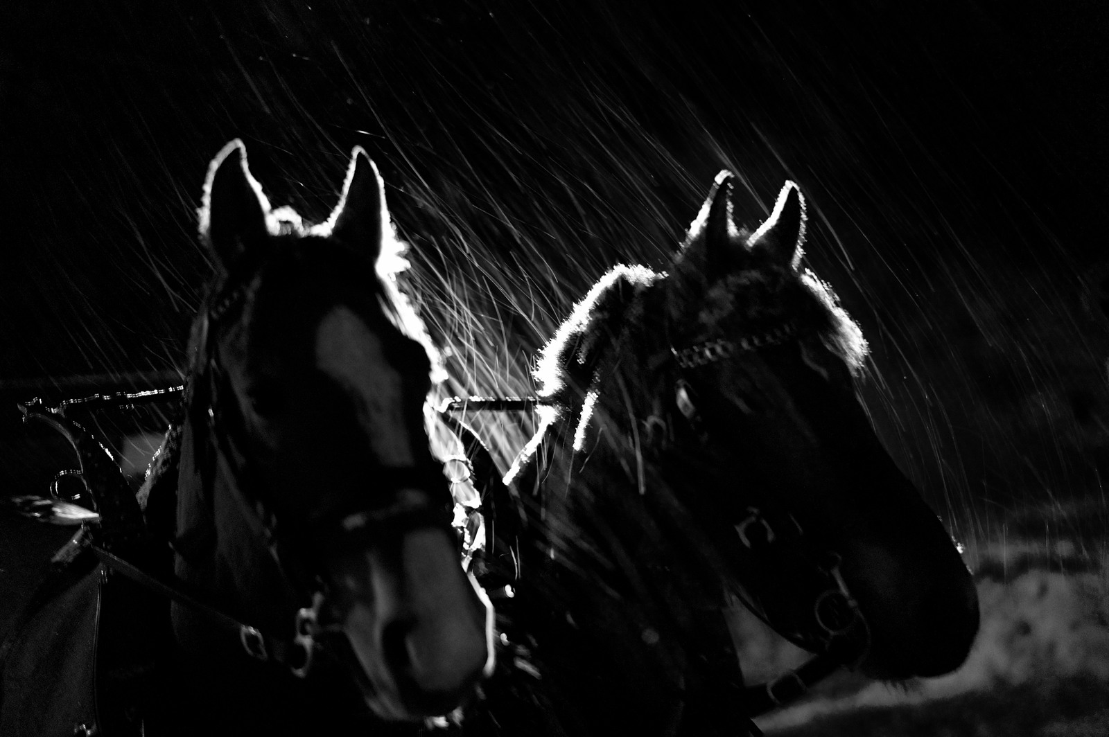 Horses in the Snowstorm